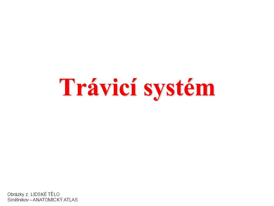 Trávicí systém Obrázky z: LIDSKÉ TĚLO Sinělnikov – ANATOMICKÝ ATLAS