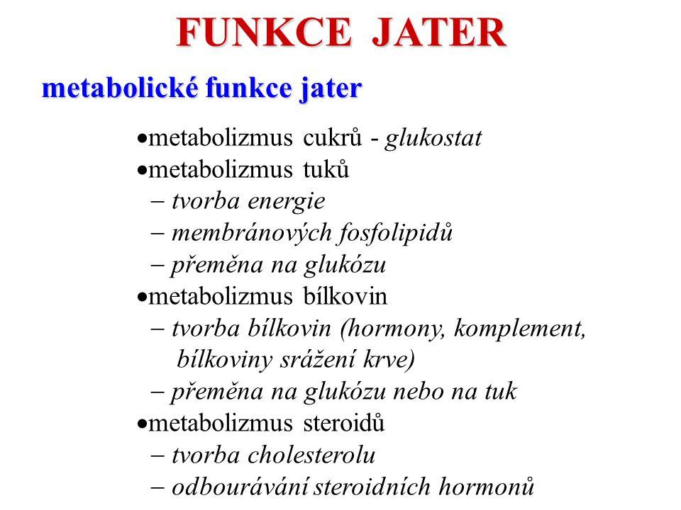 FUNKCE JATER metabolické funkce jater metabolizmus cukrů - glukostat