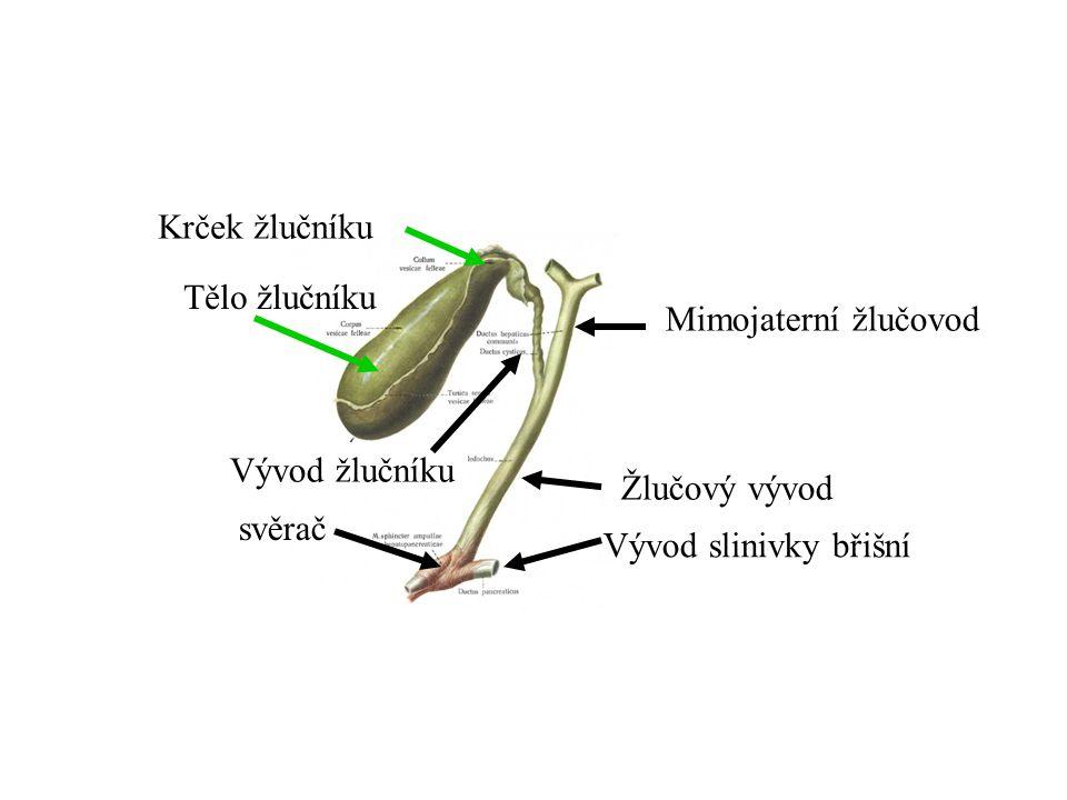 Krček žlučníku Tělo žlučníku. Mimojaterní žlučovod.