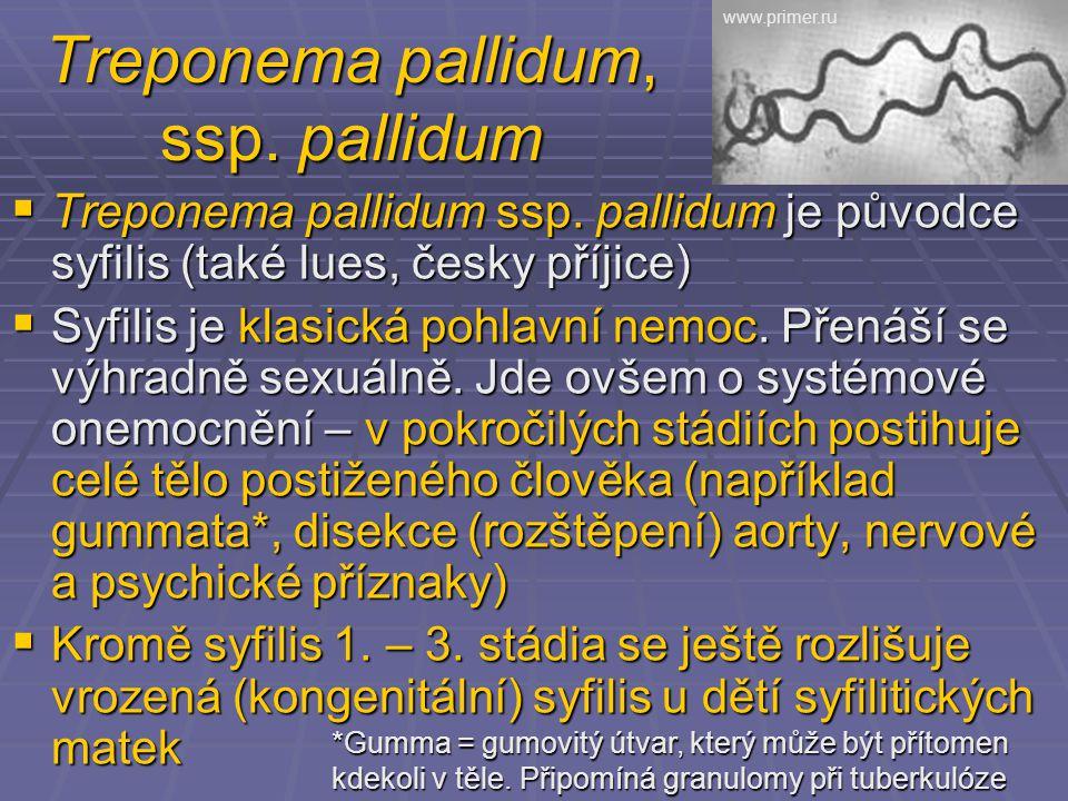 Treponema pallidum, ssp. pallidum