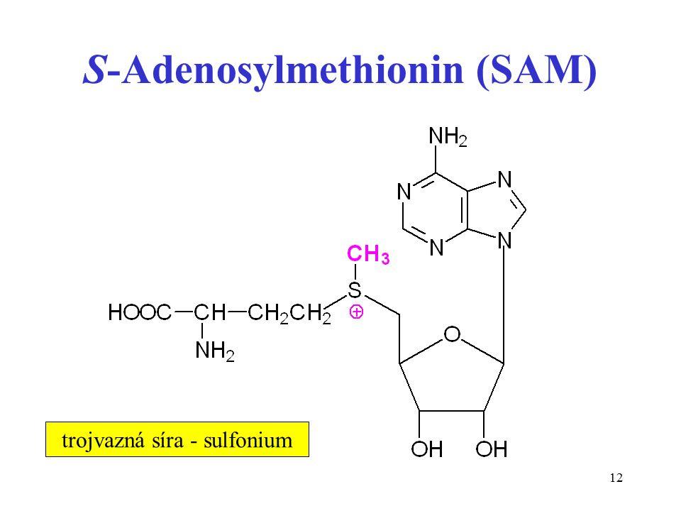 S-Adenosylmethionin (SAM)