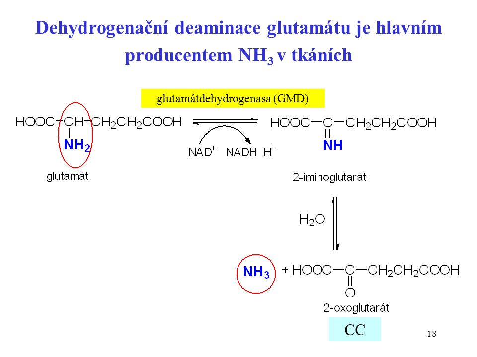 glutamátdehydrogenasa (GMD)