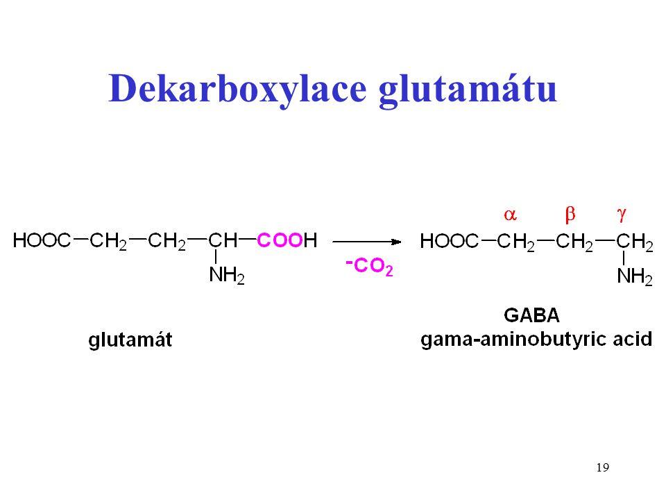 Dekarboxylace glutamátu