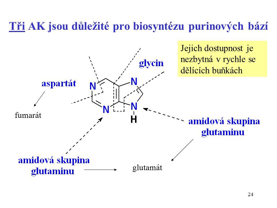 Tři AK jsou důležité pro biosyntézu purinových bází