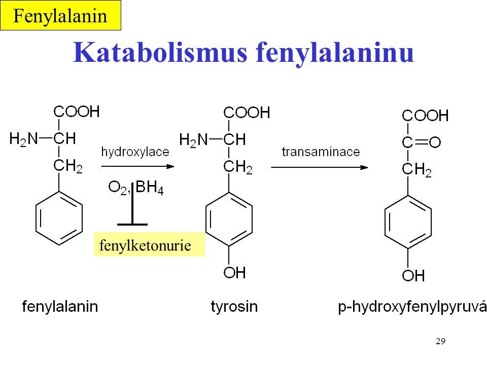 Katabolismus fenylalaninu