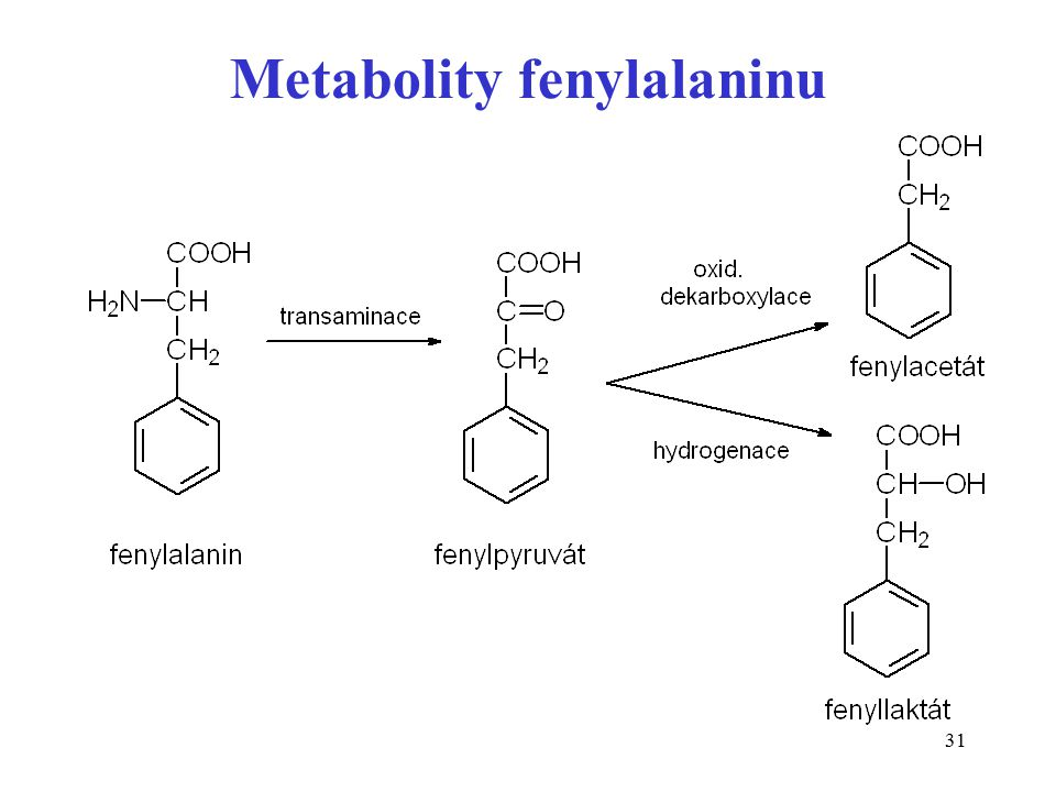 Metabolity fenylalaninu