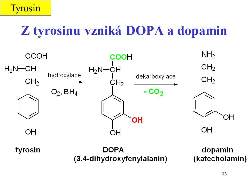 Z tyrosinu vzniká DOPA a dopamin
