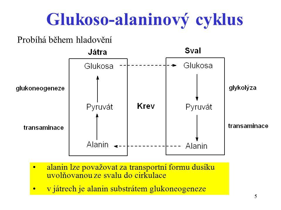 Glukoso-alaninový cyklus