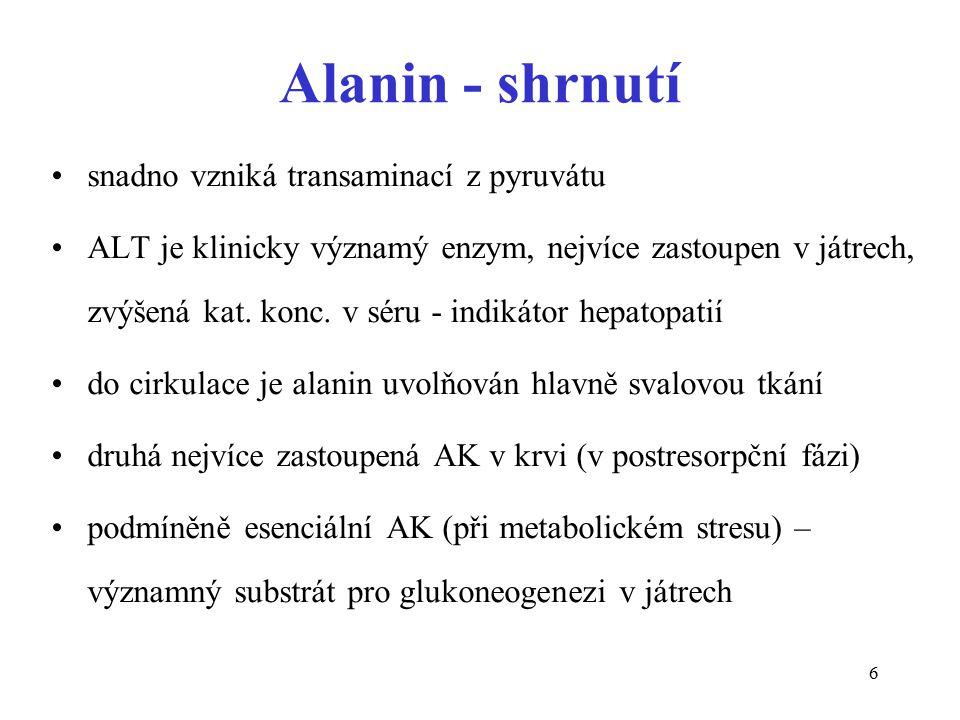 Alanin - shrnutí snadno vzniká transaminací z pyruvátu