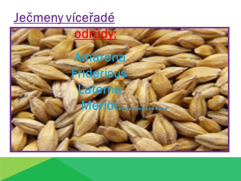 Ječmeny víceřadé odrůdy: Amarena Fridericus Laterna Merlot……………