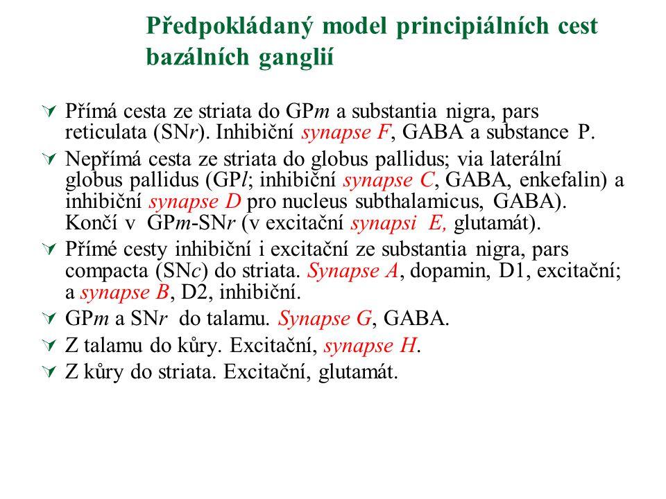Předpokládaný model principiálních cest bazálních ganglií