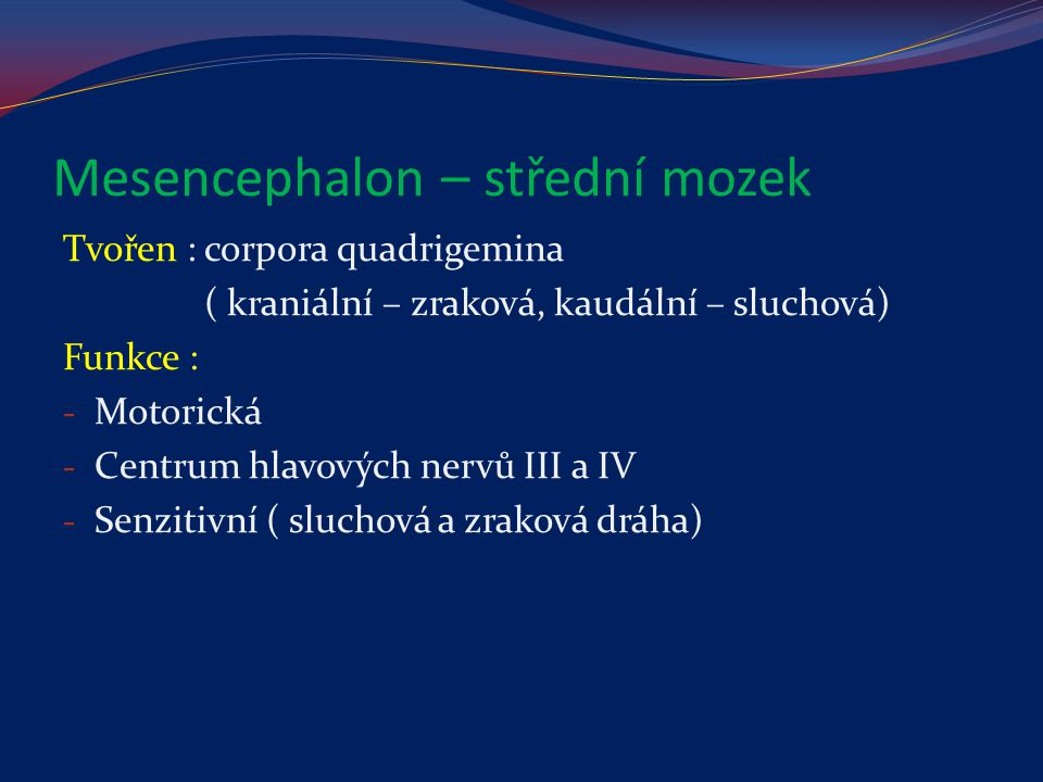 Mesencephalon – střední mozek