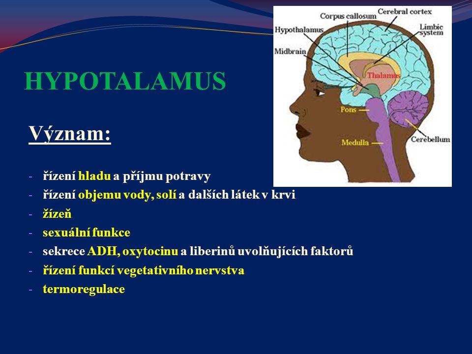 HYPOTALAMUS Význam: řízení hladu a příjmu potravy