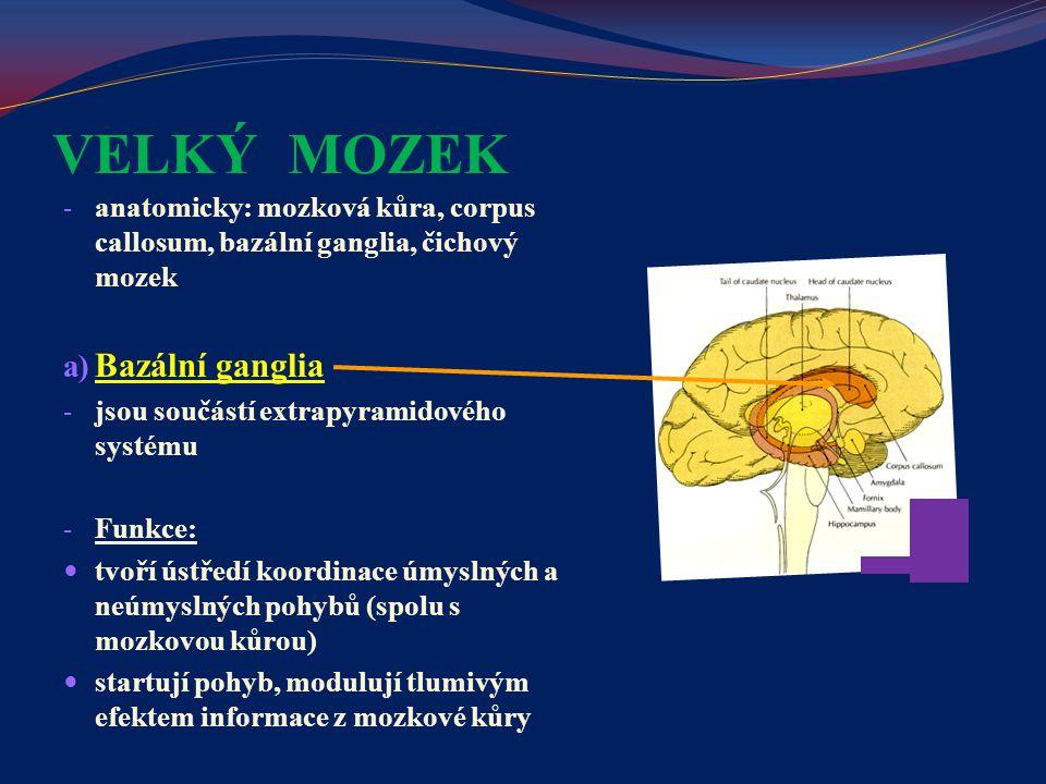 VELKÝ MOZEK Bazální ganglia
