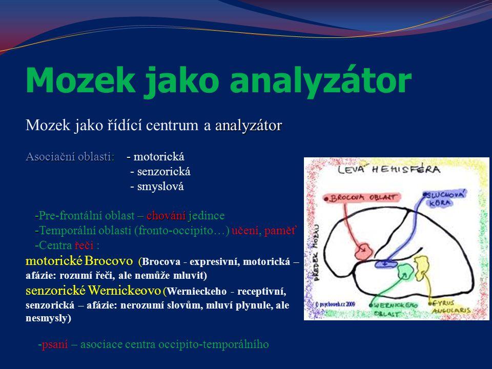 Mozek jako analyzátor Mozek jako řídící centrum a analyzátor