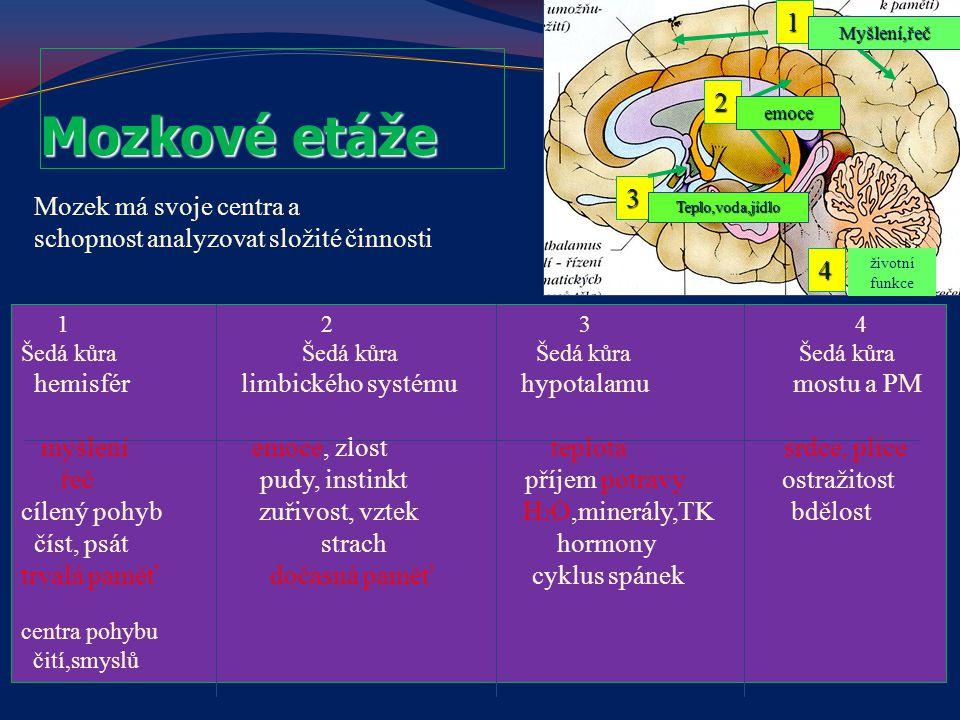 Mozkové etáže 1 2 3 Mozek má svoje centra a