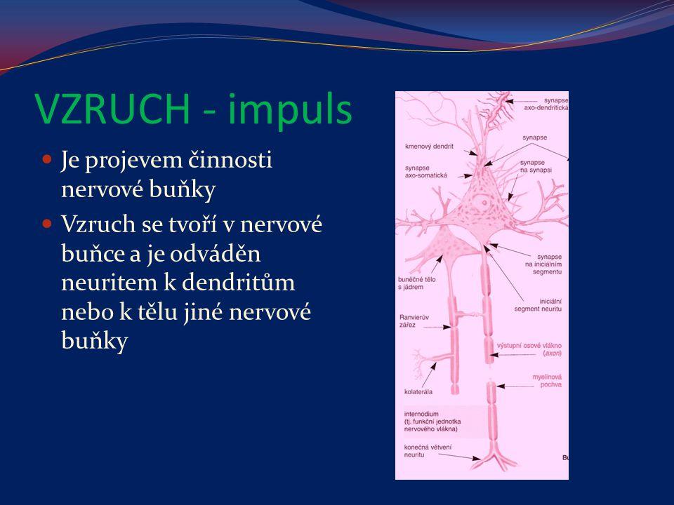 VZRUCH - impuls Je projevem činnosti nervové buňky