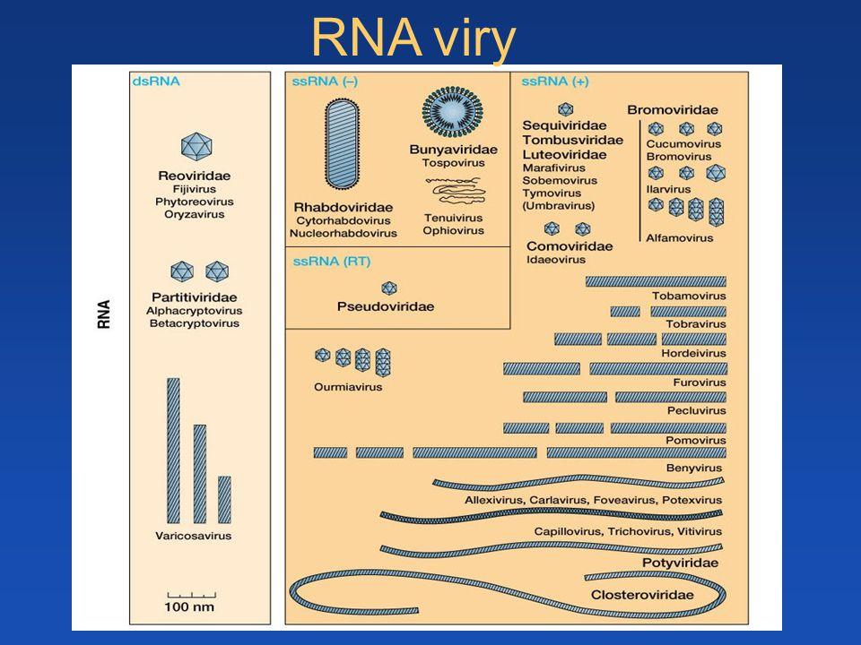 RNA viry