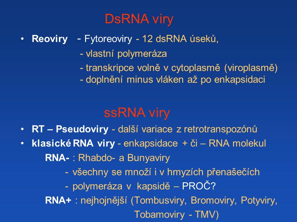 DsRNA viry ssRNA viry Reoviry - Fytoreoviry - 12 dsRNA úseků,
