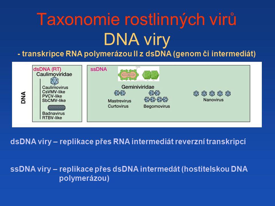 Taxonomie rostlinných virů DNA viry - transkripce RNA polymerázou II z dsDNA (genom či intermediát)