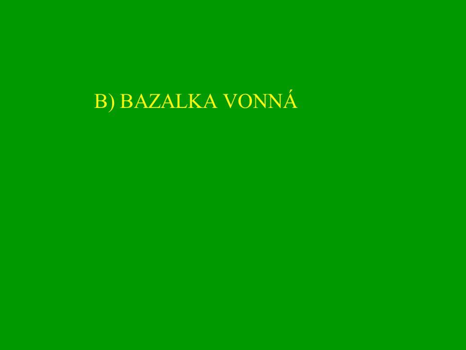 B) BAZALKA VONNÁ