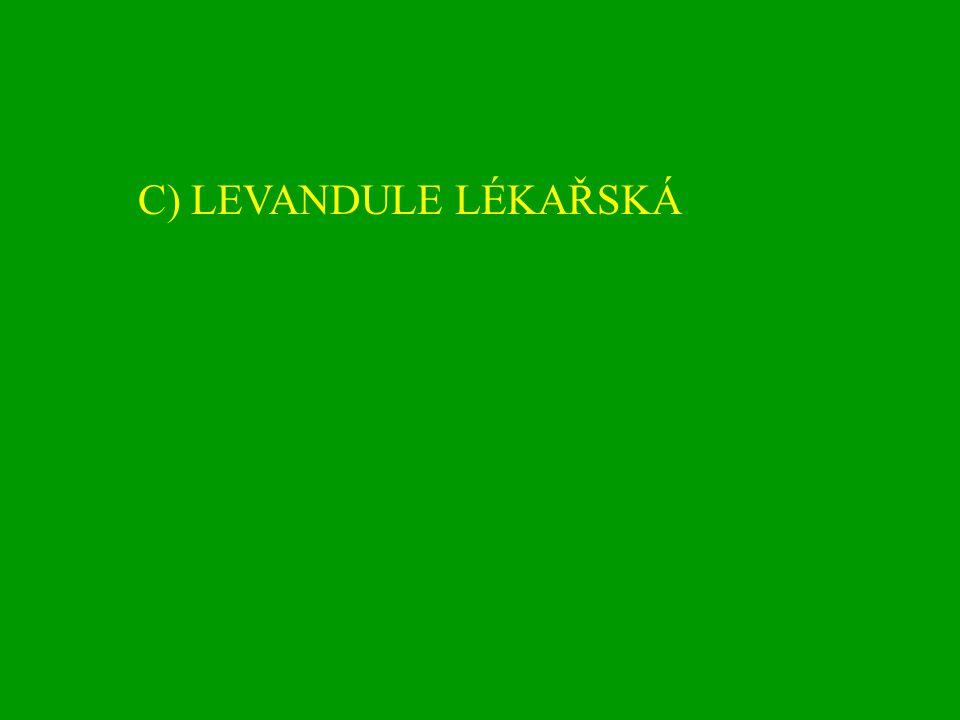 C) LEVANDULE LÉKAŘSKÁ
