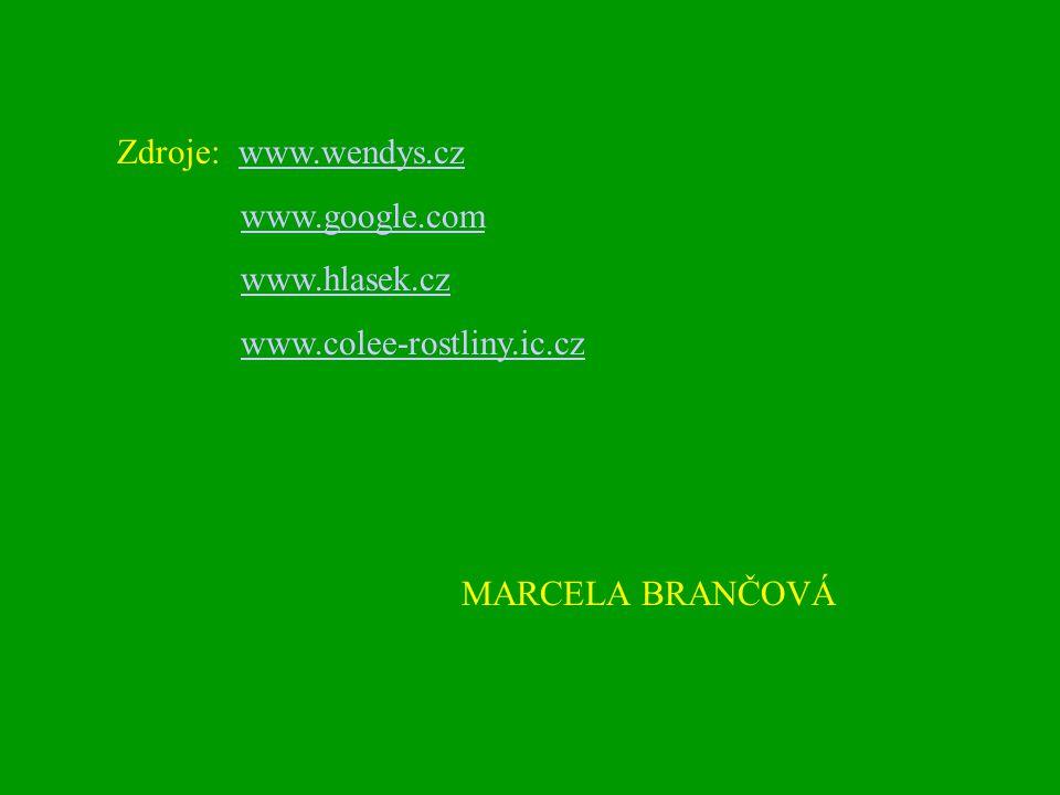 Zdroje: www.wendys.cz www.google.com www.hlasek.cz www.colee-rostliny.ic.cz MARCELA BRANČOVÁ