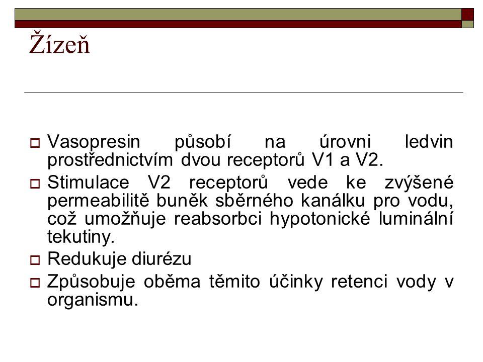 Žízeň Vasopresin působí na úrovni ledvin prostřednictvím dvou receptorů V1 a V2.