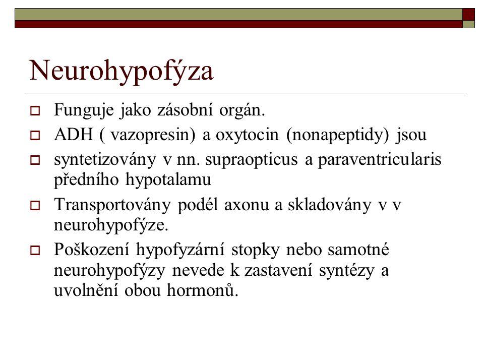 Neurohypofýza Funguje jako zásobní orgán.