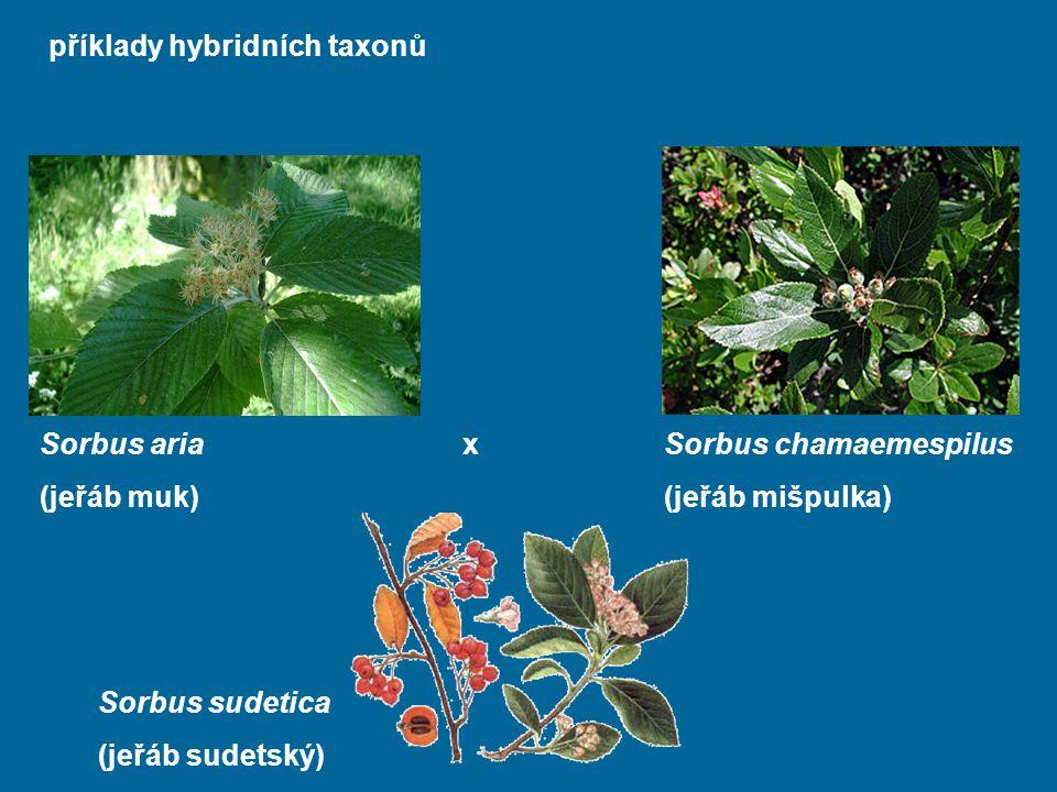 příklady hybridních taxonů
