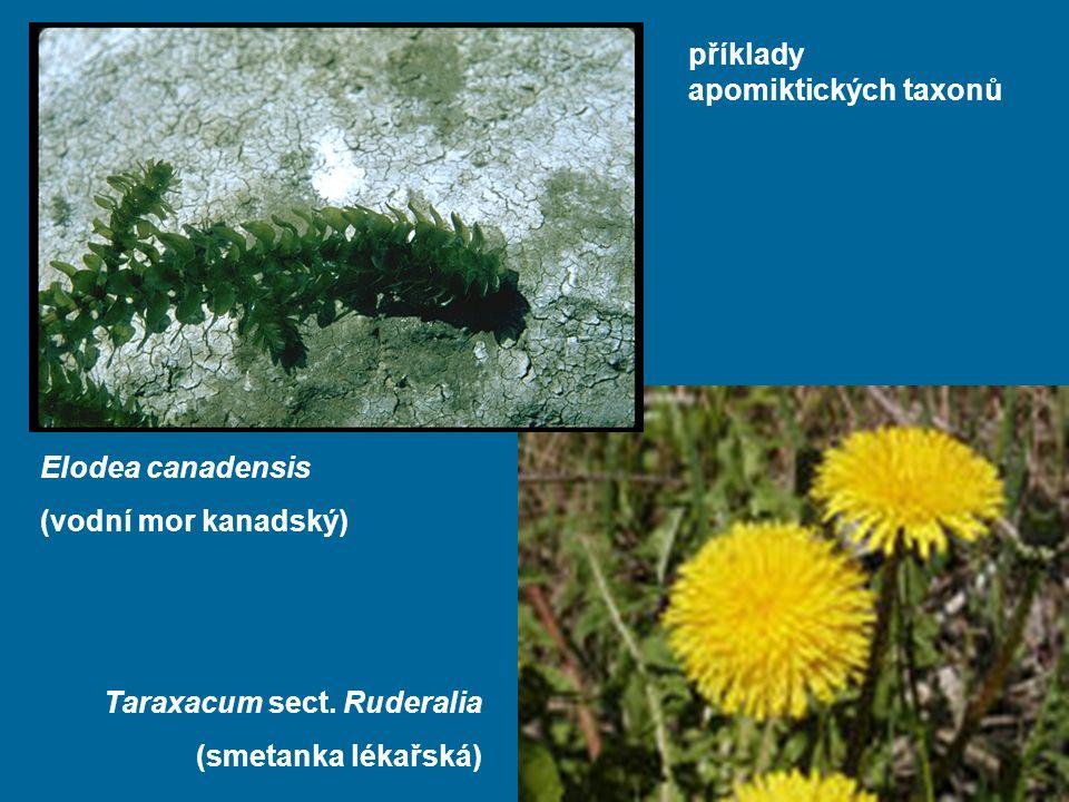 příklady apomiktických taxonů