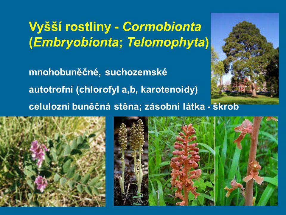 Vyšší rostliny - Cormobionta (Embryobionta; Telomophyta)