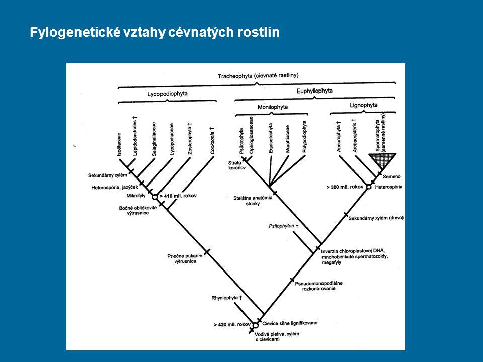 Fylogenetické vztahy cévnatých rostlin