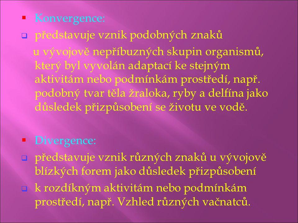 Konvergence: představuje vznik podobných znaků.