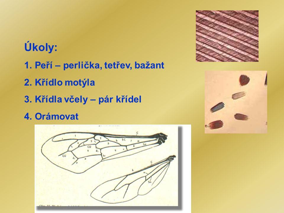 Úkoly: Peří – perlička, tetřev, bažant Křídlo motýla
