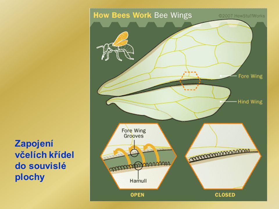 Zapojení včelích křídel do souvislé plochy