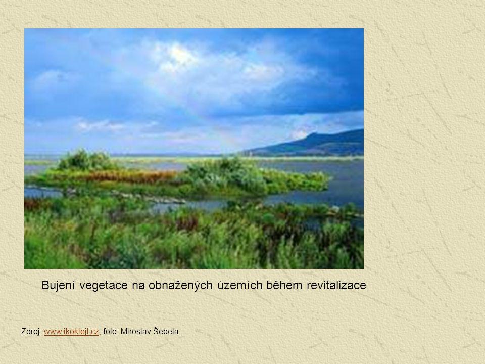 Bujení vegetace na obnažených územích během revitalizace