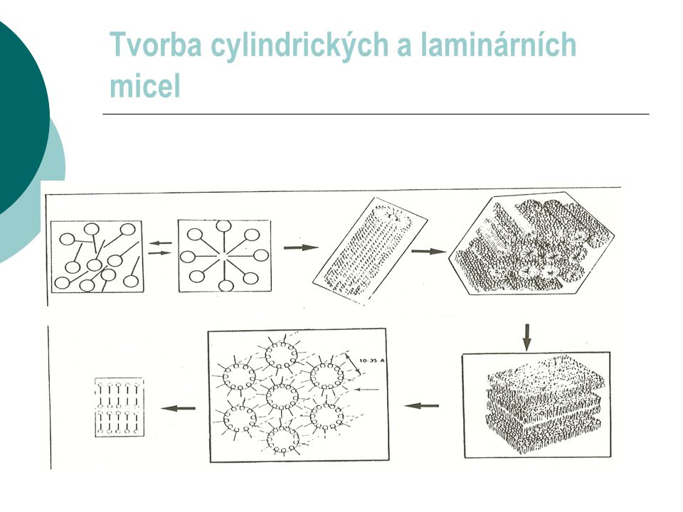 Tvorba cylindrických a laminárních micel