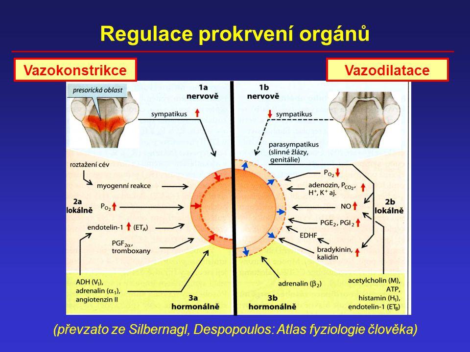 Regulace prokrvení orgánů