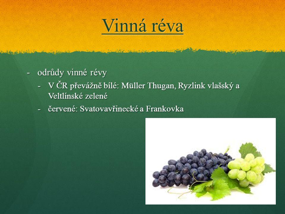Vinná réva odrůdy vinné révy