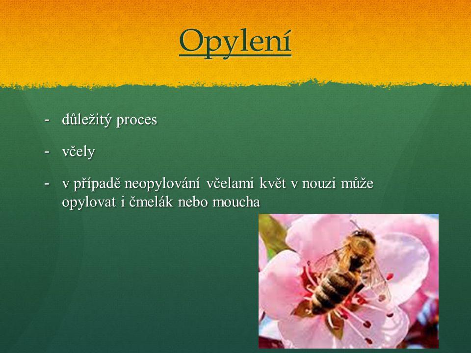 Opylení důležitý proces včely
