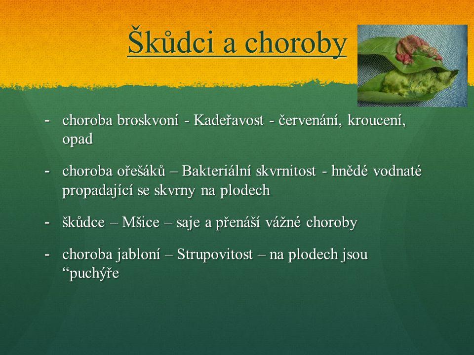 Škůdci a choroby choroba broskvoní - Kadeřavost - červenání, kroucení, opad.
