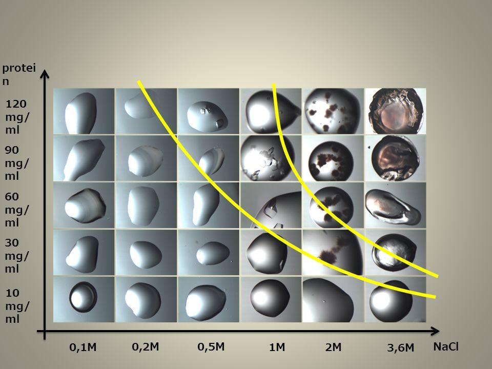 protein 120 mg/ml 90 mg/ml 60 mg/ml 30 mg/ml 10 mg/ml 0,1M 0,2M 0,5M 1M 2M 3,6M NaCl