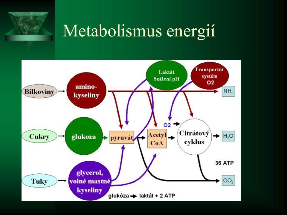 Metabolismus energií