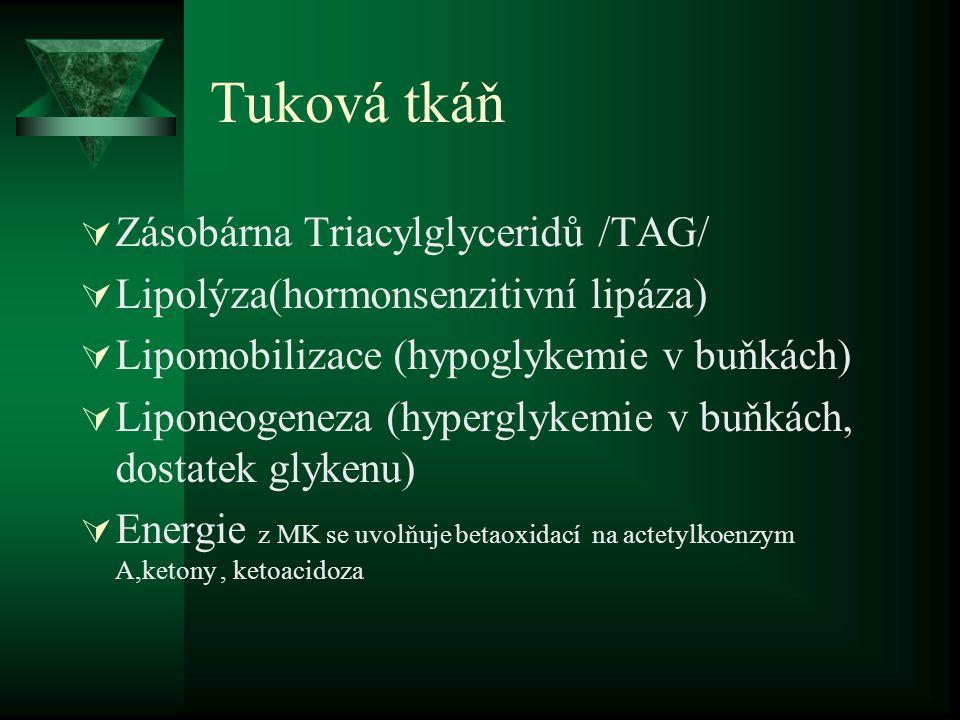 Tuková tkáň Zásobárna Triacylglyceridů /TAG/