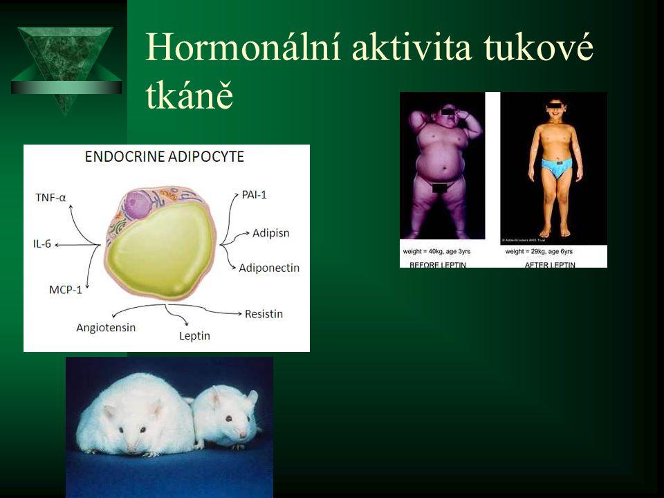 Hormonální aktivita tukové tkáně