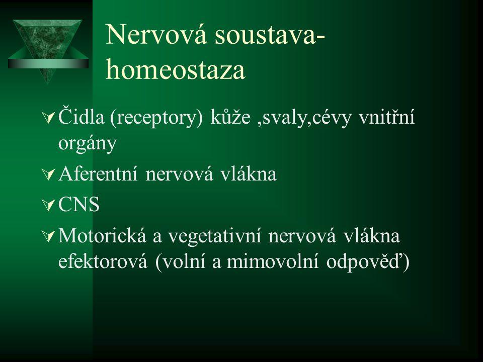 Nervová soustava- homeostaza