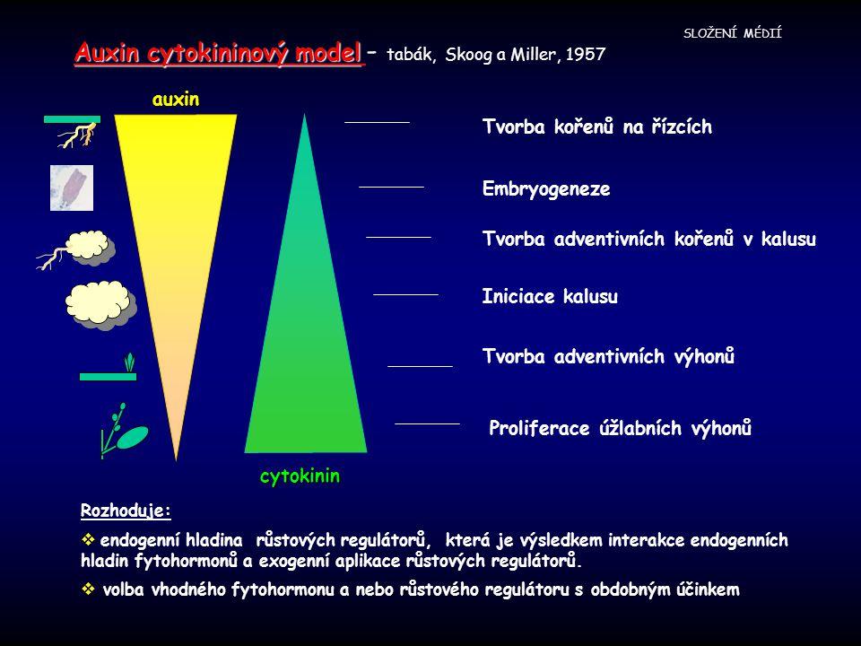 Auxin cytokininový model - tabák, Skoog a Miller, 1957