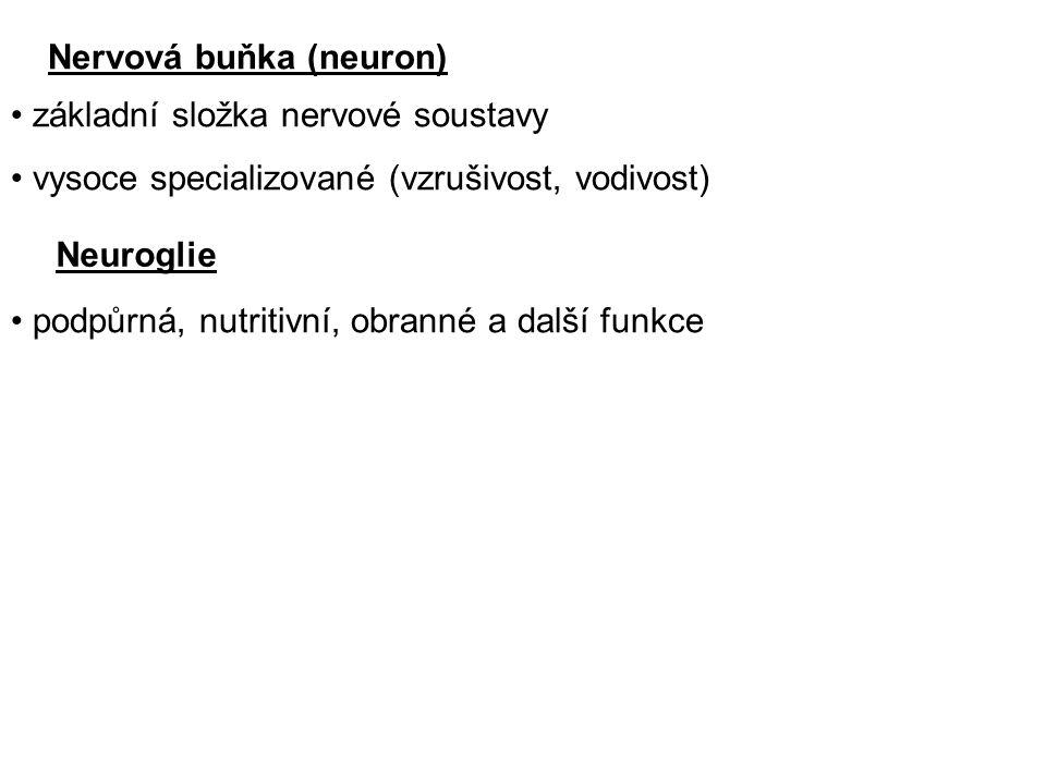 Nervová buňka (neuron)