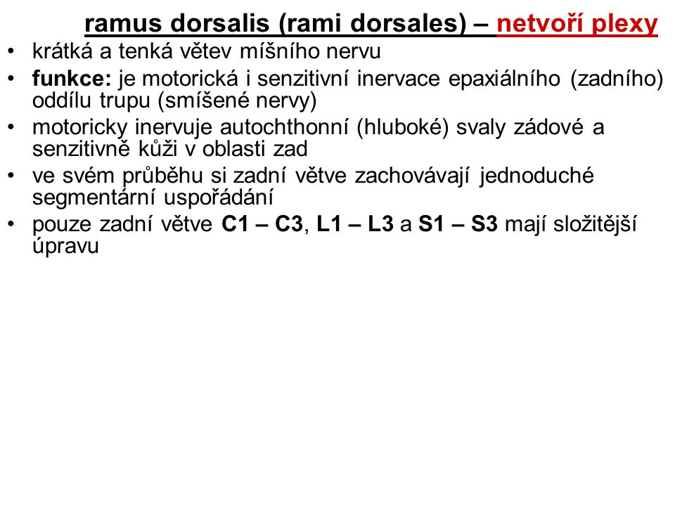 ramus dorsalis (rami dorsales) – netvoří plexy